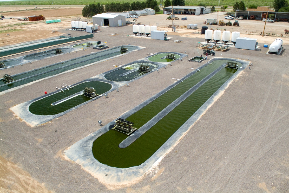 What's (not) happening with Algae Biofuels